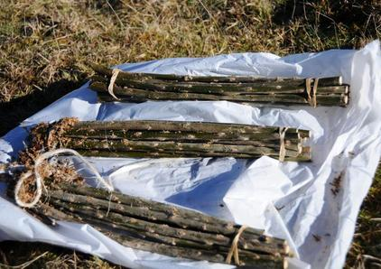 Bundles of fodder will poles ready for planting